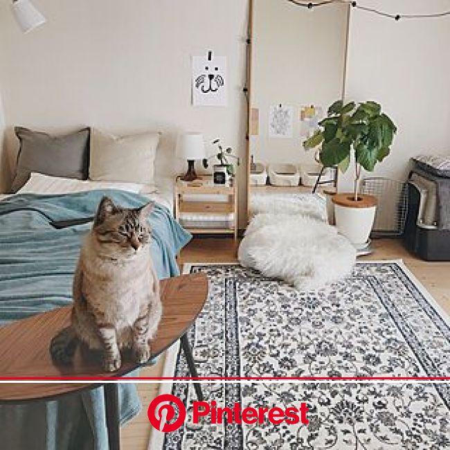 ウンベラータ/猫/1R/一人暮らし/観葉植物...などのインテリア実例 - 2019-04-17 15:36:38 | RoomClip(ルームクリップ) | インテリア 家具, インテリア, ふたり暮らし インテリア #beauty,#skincare